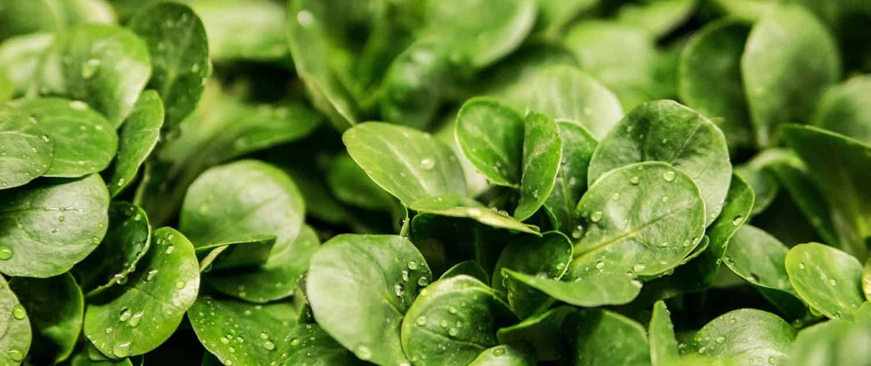 Luftbefeuchtung im Gemüselager und Obstlager