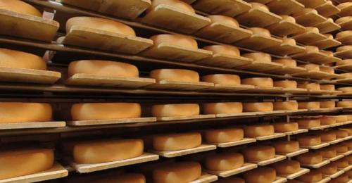 Luftbefeuchtung im Käselager